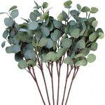 Mejores Hojas de eucalipto